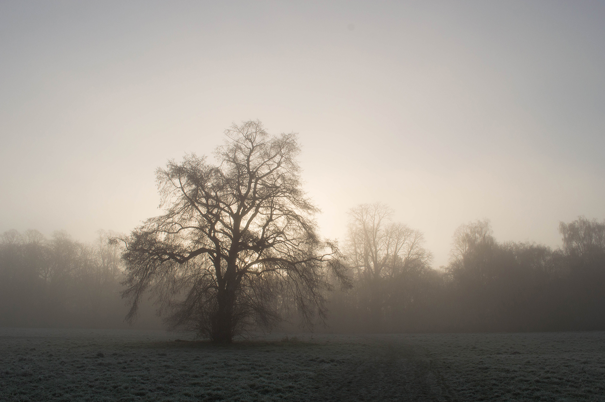 Misty Nonsuch Park